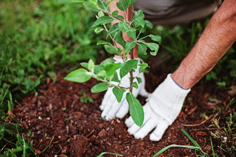 plant-trees (1)